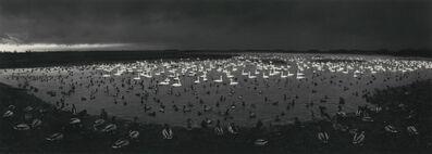 Pentti Sammallahti, 'Martin Mere, England', 1996