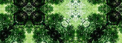 Ryo Ohwada, 'green', 2006