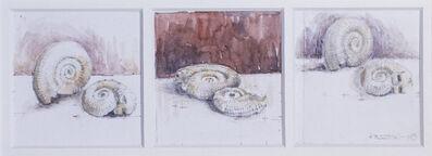 Robert Preston, 'Studies of fossil shells', 2009