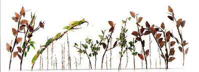 Maria Fernanda Cardoso, 'Jardín de Insectos', 2010