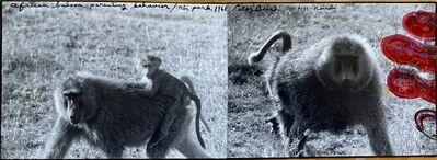 Peter Beard, 'Baboon Diptych , Nbi Park, 1968', 1968