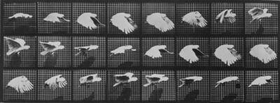 Eadweard Muybridge, 'Animal Locomotion: Plate 759 (Cockatoo in Flight)', 1887
