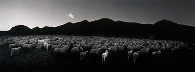 Pentti Sammallahti, 'Barun-Khemchik, Tuva, Siberia (Flock of Sheep and Goat)', 1997