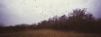 Richard Billingham, 'Birds', 2008
