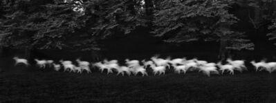 Paul Caponigro, 'Running White Deer, County Wicklow, Ireland', 1967