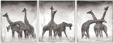 Nick Brandt, 'Giraffe Triptych, Maasai Mara, 2005', 2005