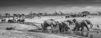 David Yarrow, 'Before Man, Savute, Botswana', 2019