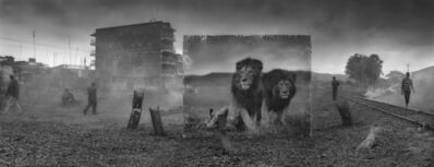 Nick Brandt, 'Railway Line with Lion Brothers', 2015