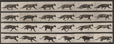 Eadweard Muybridge, 'Plate 718, Animal Locomotion: Cat trotting, changing to a gallop', 1872-1885 / printed 1887