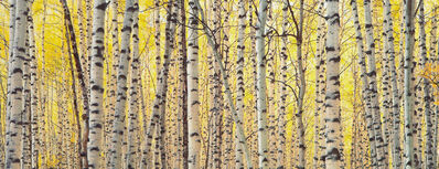 Christopher Burkett, 'Aspens and Golden Light, Colorado', 2003