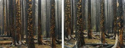 Laura McPhee, 'Early Spring (Peeling Bark in Rain)', 2008