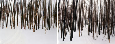 Laura McPhee, 'Untitled (Sawtooth Valley, Idaho) (#94104-94089)', 2008