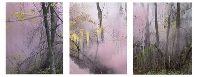 Sandra Kantanen, 'Untitled (Forest 10, 8 and 15)', 2019