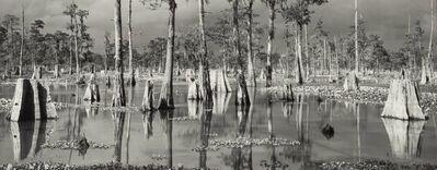 Michael A. Smith, 'Atchafalaya Basin, Louisiana', 1985