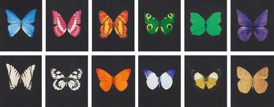 Damien Hirst, 'Damien Hirst, Butterfly | Portfolio', 2009