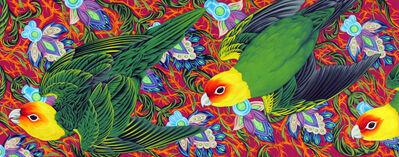 Kevin Veara, 'Americana #16 Carolina Parakeet', 2015