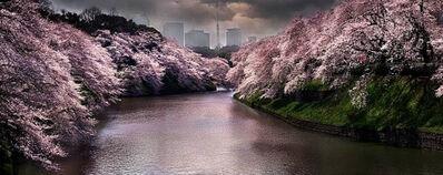 David Drebin, 'Pink Spring', 2015