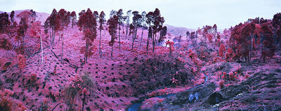 Richard Mosse, 'If I Ran the Zoo, North Kivu, eastern Congo', 2012