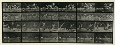 Eadweard Muybridge, 'Animal Locomotion #777', 1887