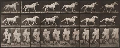 """Eadweard Muybridge, 'Plate 596, Animal Locomotion: """"Eagle"""" Trotting Free', 1872-1885 / printed 1887"""