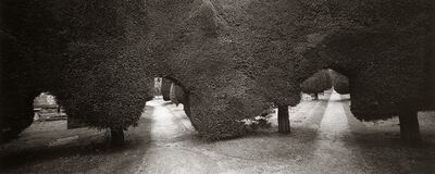 Dick Arentz, 'Yew Trees, Paineswick, England', 2000