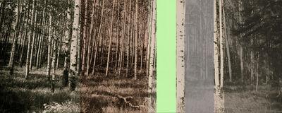 Dianne Bos, 'Panoramic Aspens', 2014