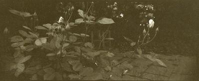 Josef Sudek, 'Untitled ~ Garden Study with Rosebuds', ca. 1950