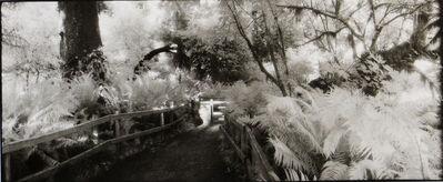 Geir Jordahl, 'Prehistoric Rain Forest, Oregon', 1988