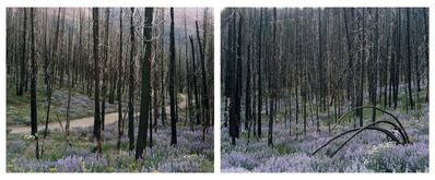 Laura McPhee, 'Midsummer, Fischer Creek Road 5/5 (Diptych)'