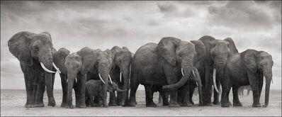 Nick Brandt, 'Elephant Group On Bare Earth, Amboseli', 2008