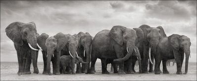 Nick Brandt, 'Elephant Group on bare earth, Amboseli', 2008