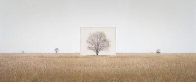 Myoung Ho Lee, 'Tree...#3', 2012