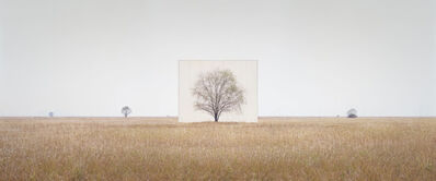 Lee Myoung Ho, 'Tree…#3', 2012