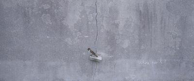Honggoo Kang, 'Sparrow', 2016
