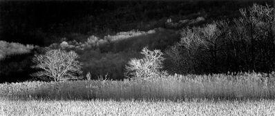 Brian Kosoff, 'Winter Trees', 2012