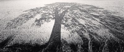Michael Kenna, 'Summer Shadows, Nottinghamshire, England', 1998