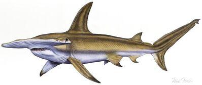 Flick Ford, 'Hammerhead Shark', 2017