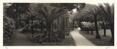 Kerik Kouklis, 'Fern Pathway, Golden Gate Park, San Francisco', 1995