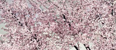 Thomas Demand, 'Bloom', 2014
