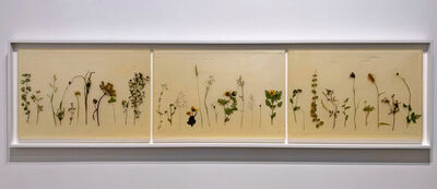 Jil Weinstock, 'Herbaria (triptych)', 2019