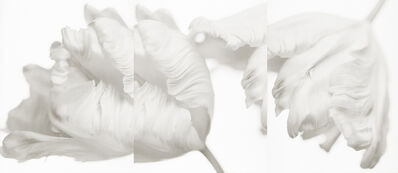 Yumiko Izu, 'Secret Garden Blanc 84', 2008