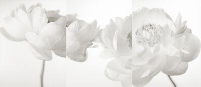 Yumiko Izu, 'Secret Garden Blanc 51', 2008