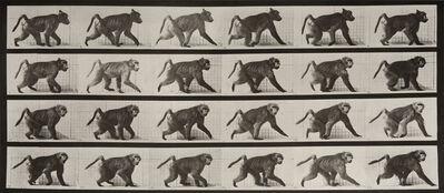 Eadweard Muybridge, ' Animal Locomotion: Plate 748 (Baboon Walking on Four Legs)', 1887