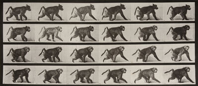 Eadweard Muybridge, 'Animal Locomotion: Plate 748 (Baboon Walking on Four Legs)', 1887