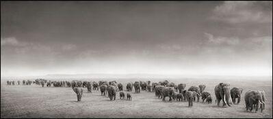 Nick Brandt, 'Elephant Exodus, Amboseli 2004', 2004