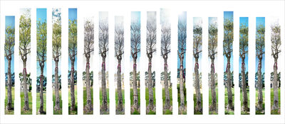 Shi Jin-Hua 石晉華, 'The Yoga Tree', 1994-1996