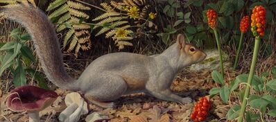Raymond Booth, 'Squirrel on a woodland floor', 1969