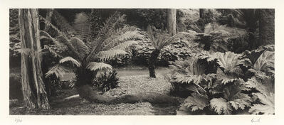 Kerik Kouklis, 'Ferns, Golden Gate Park, San Francisco', 1996