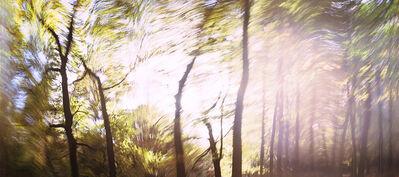 Dominic Pote, 'Hopwas Woods', 2014