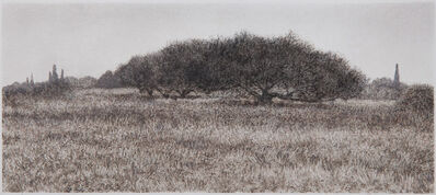 George Tzannes, 'Olive Trees in Field', 2010